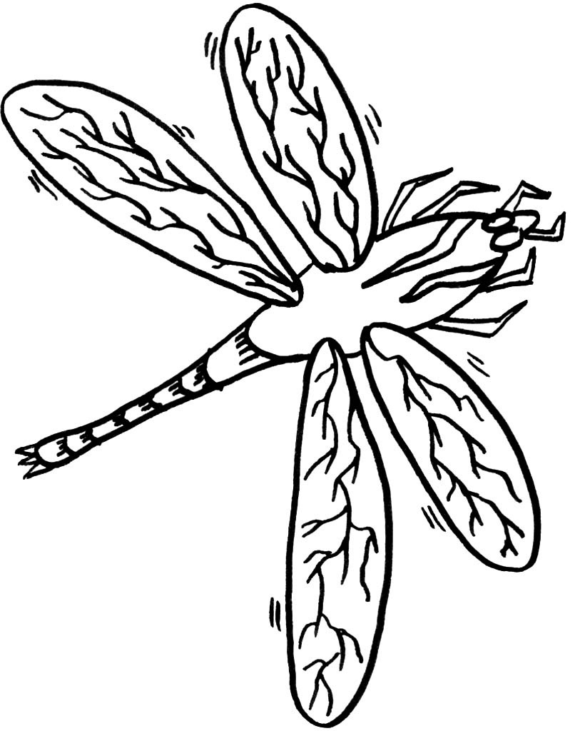 Dragonfly coloring for Dragonfly coloring pages
