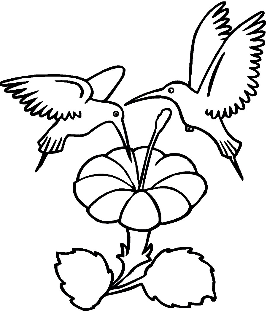 Printable Hummingbird Coloring Pages | Coloring Me