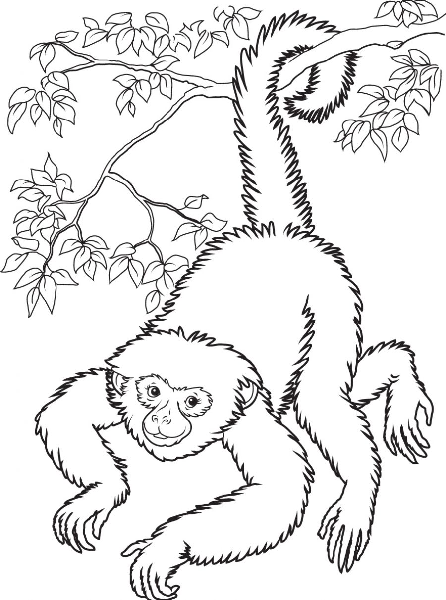 monkey coloring sheets - Monkey Coloring Pages
