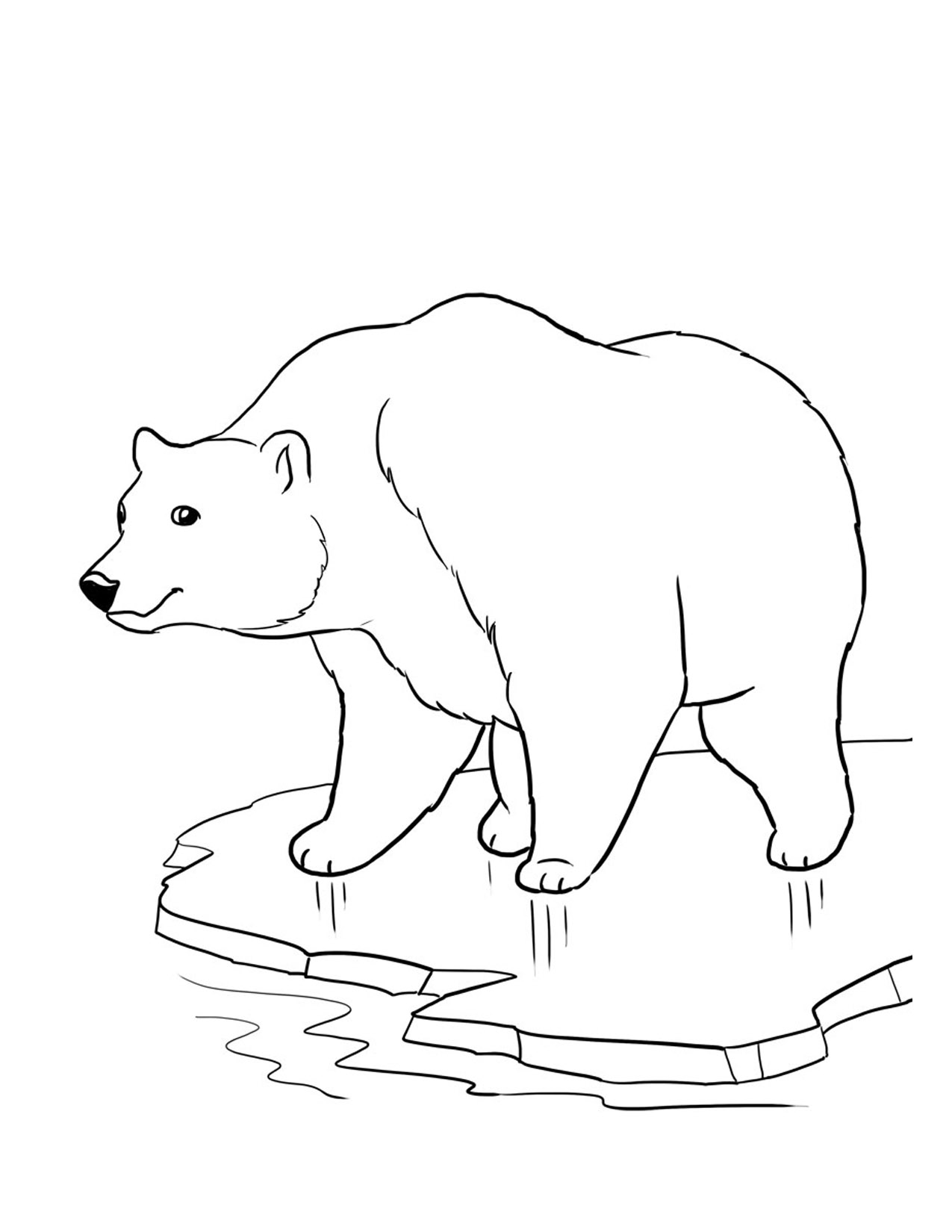 polar bear coloring sheets