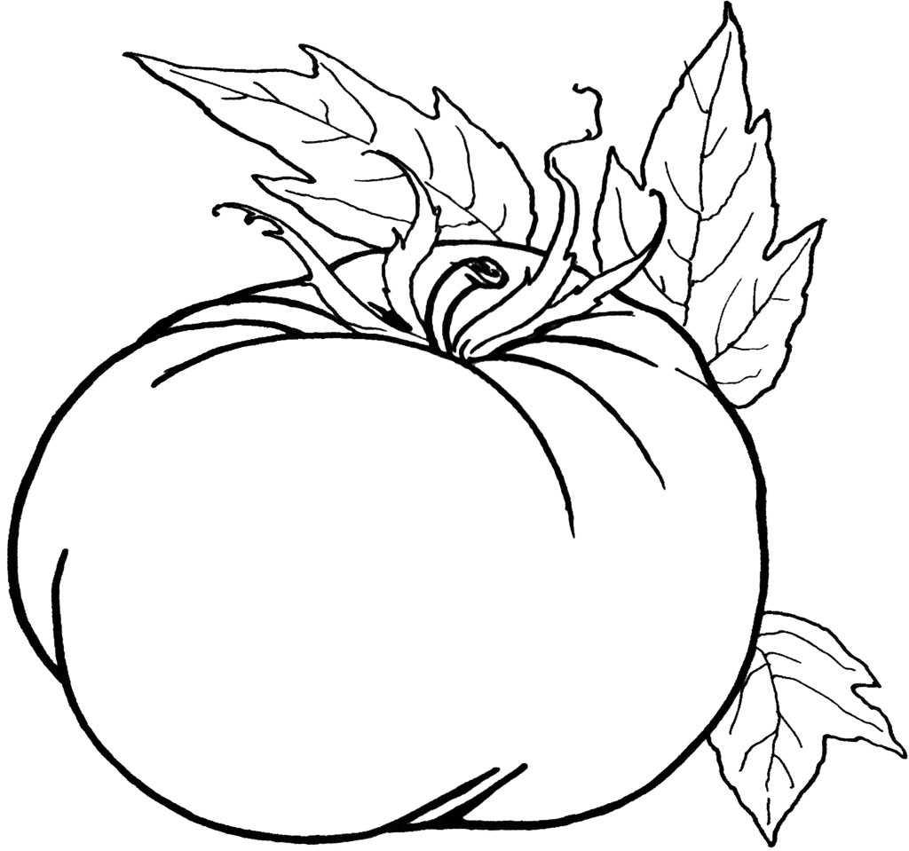 pumpkin coloring pages printable pumpkin coloring pages pumpkin color