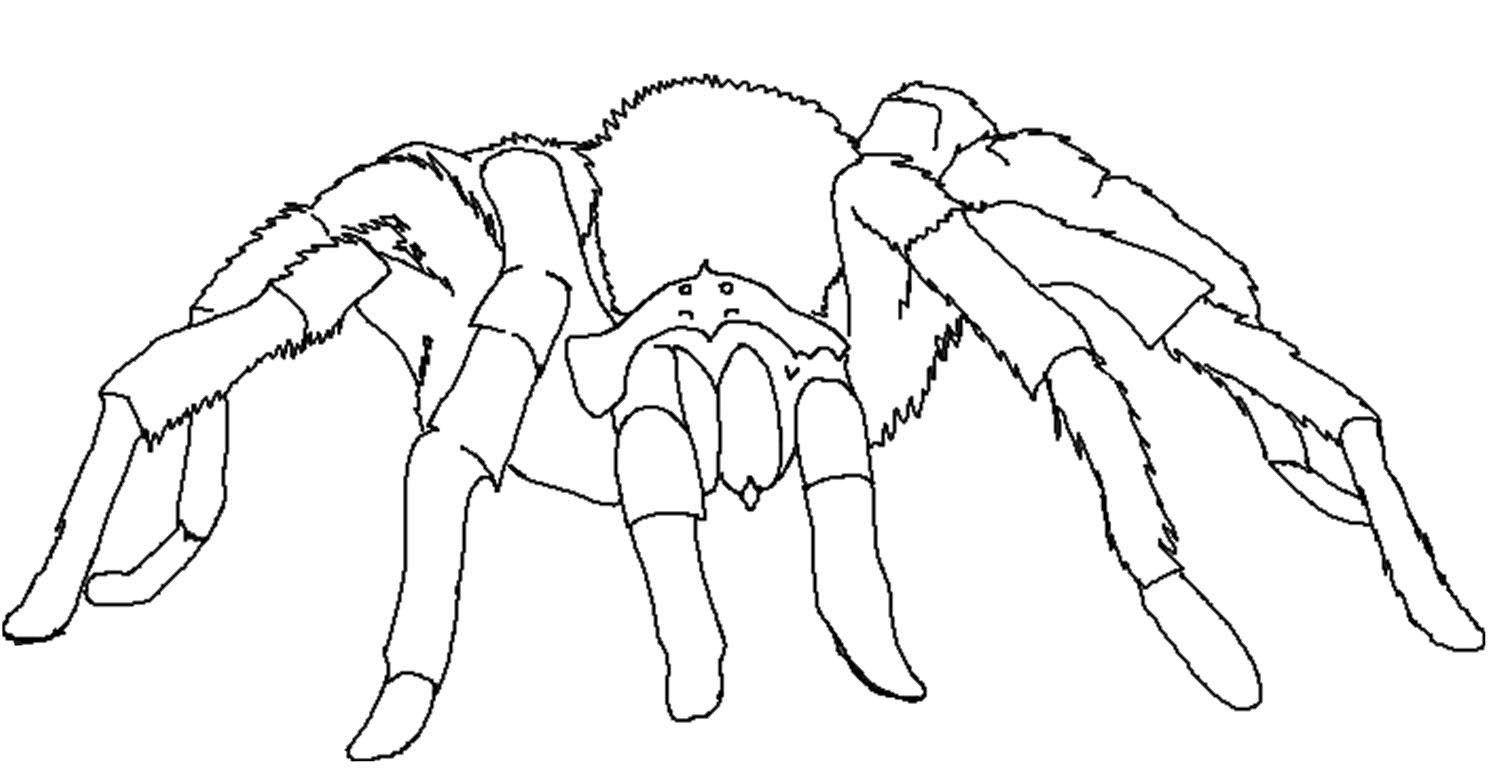 coloring pages tarantula - photo#6