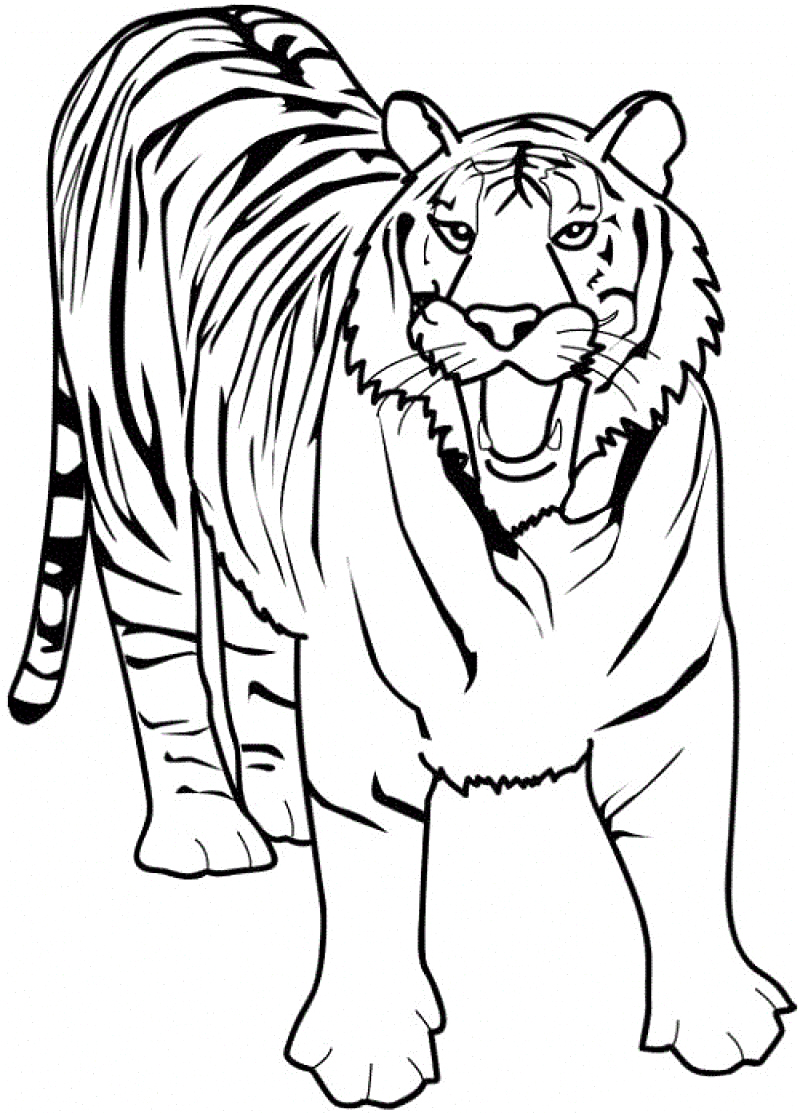 photo relating to Tiger Printable called Cost-free Printable Tiger Coloring Internet pages