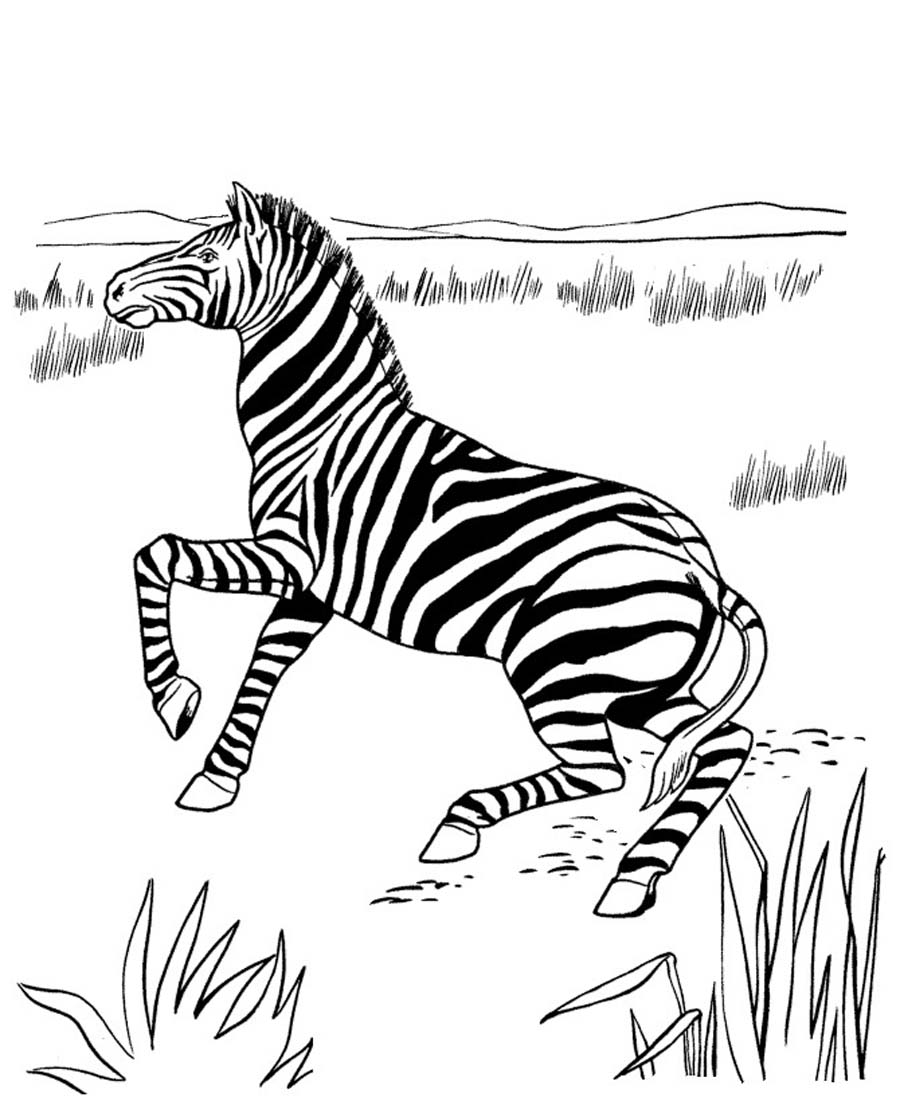 Free coloring pages of zebra stripes - Free Printable Zebra Coloring Pages