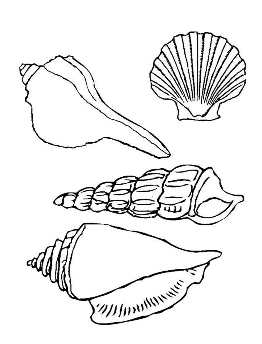 seashell coloring pages - photo#12