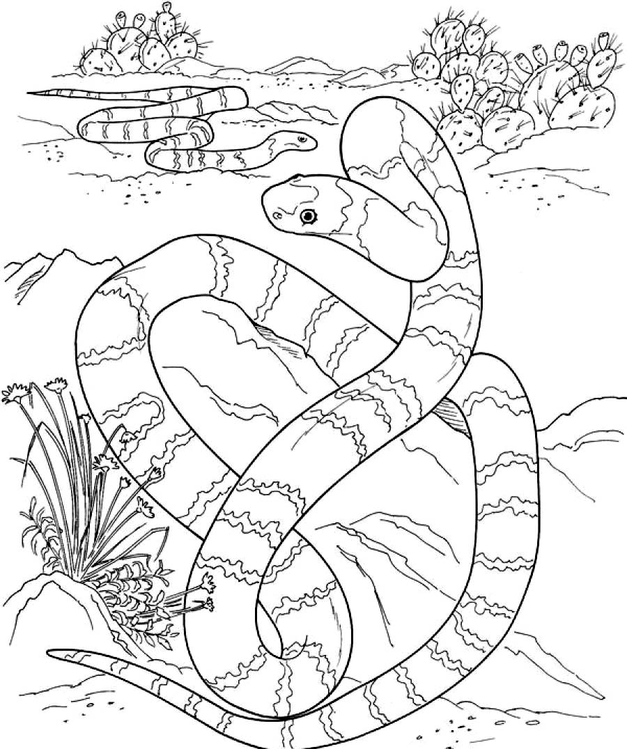 rattlesnake coloring page - snakecoloring