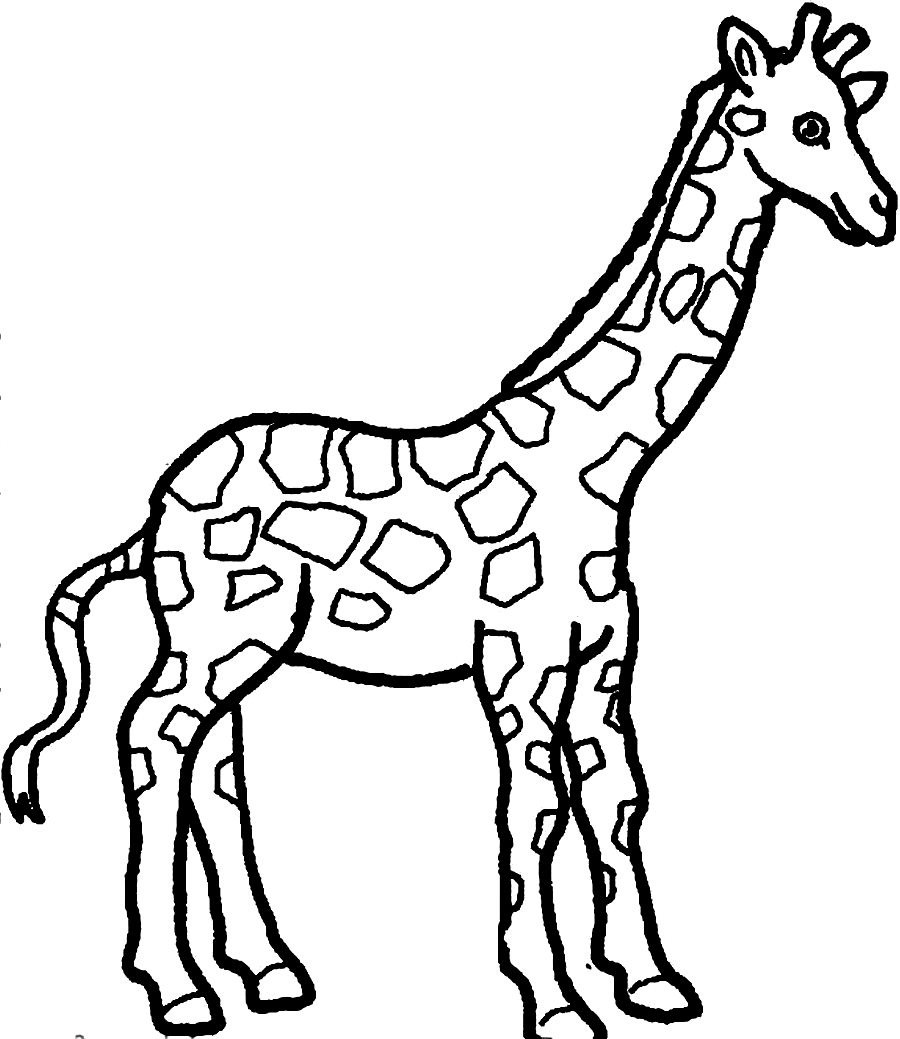 Free coloring pages of giraffe drawing for Giraffe coloring pages to print