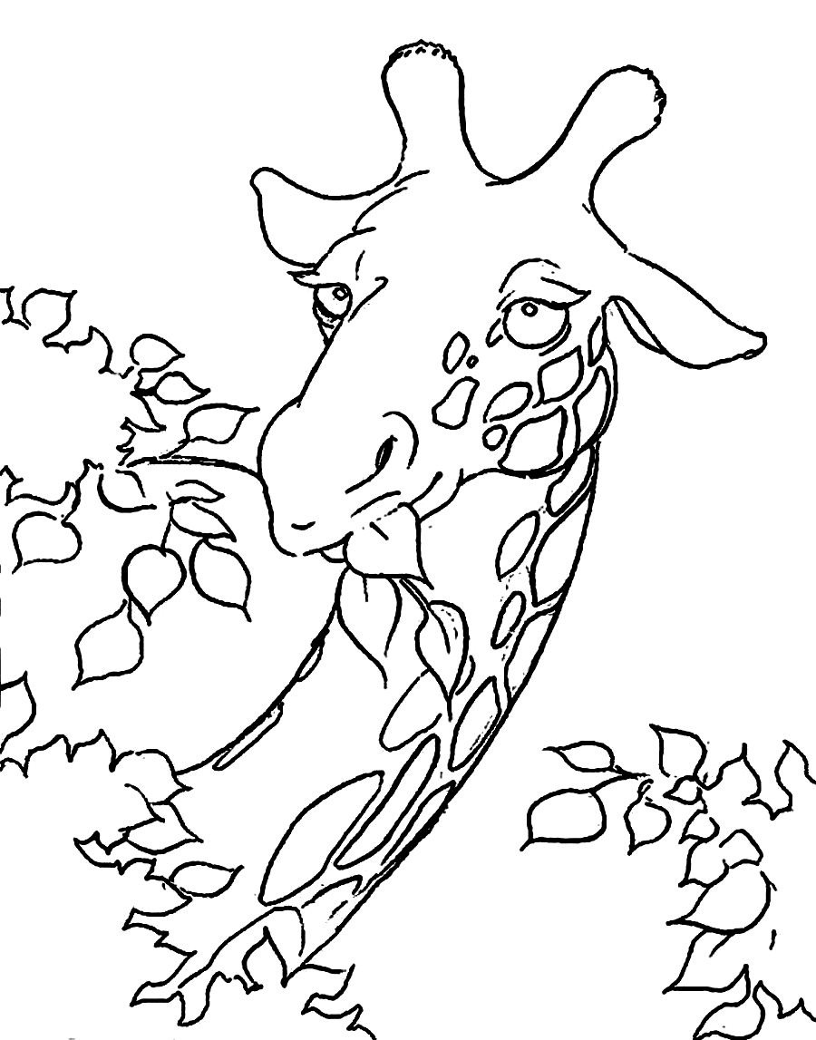 Giraffe head coloring for Giraffe coloring pages to print