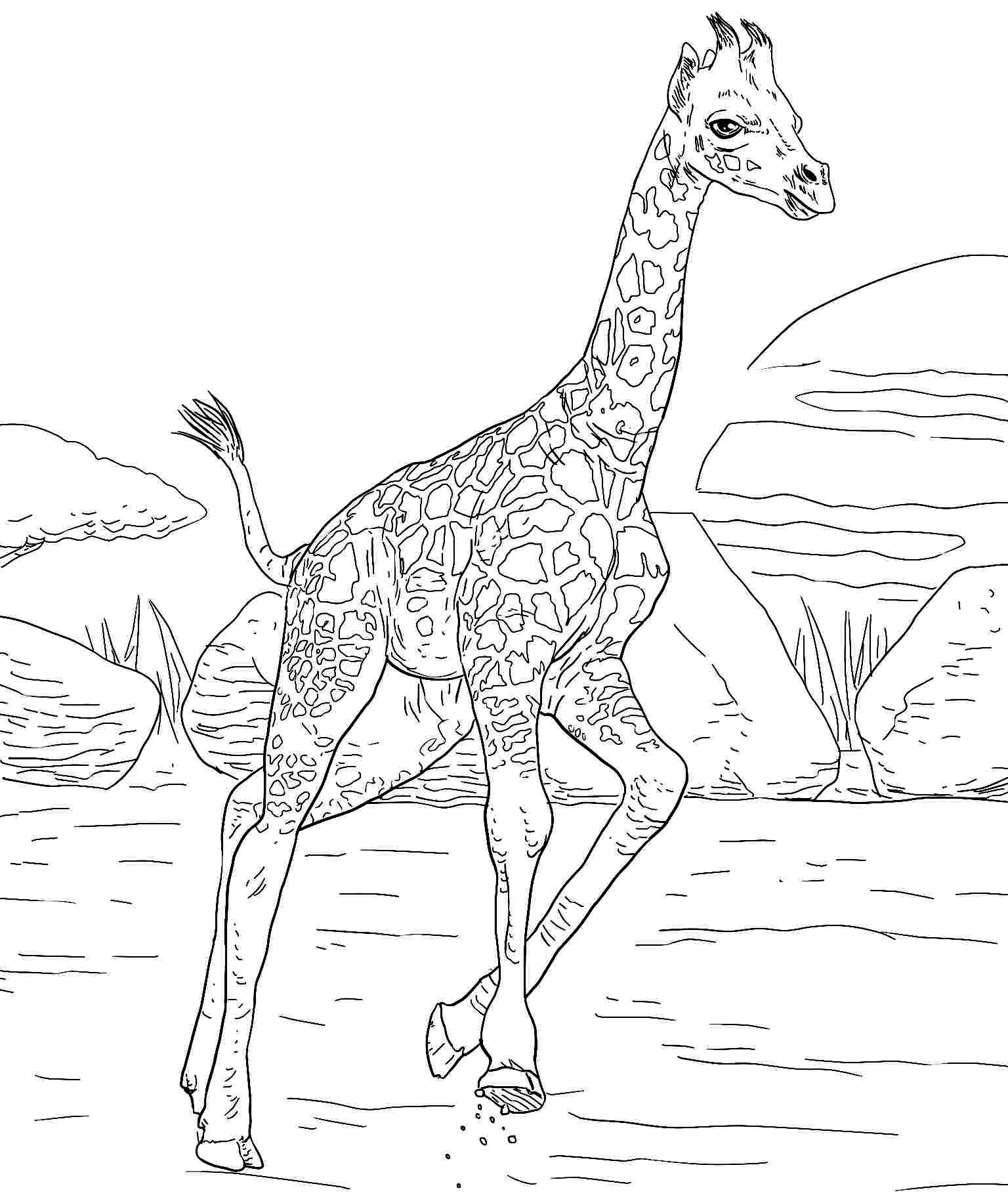 Color animals on pinterest coloring pages animal for Giraffe coloring pages to print