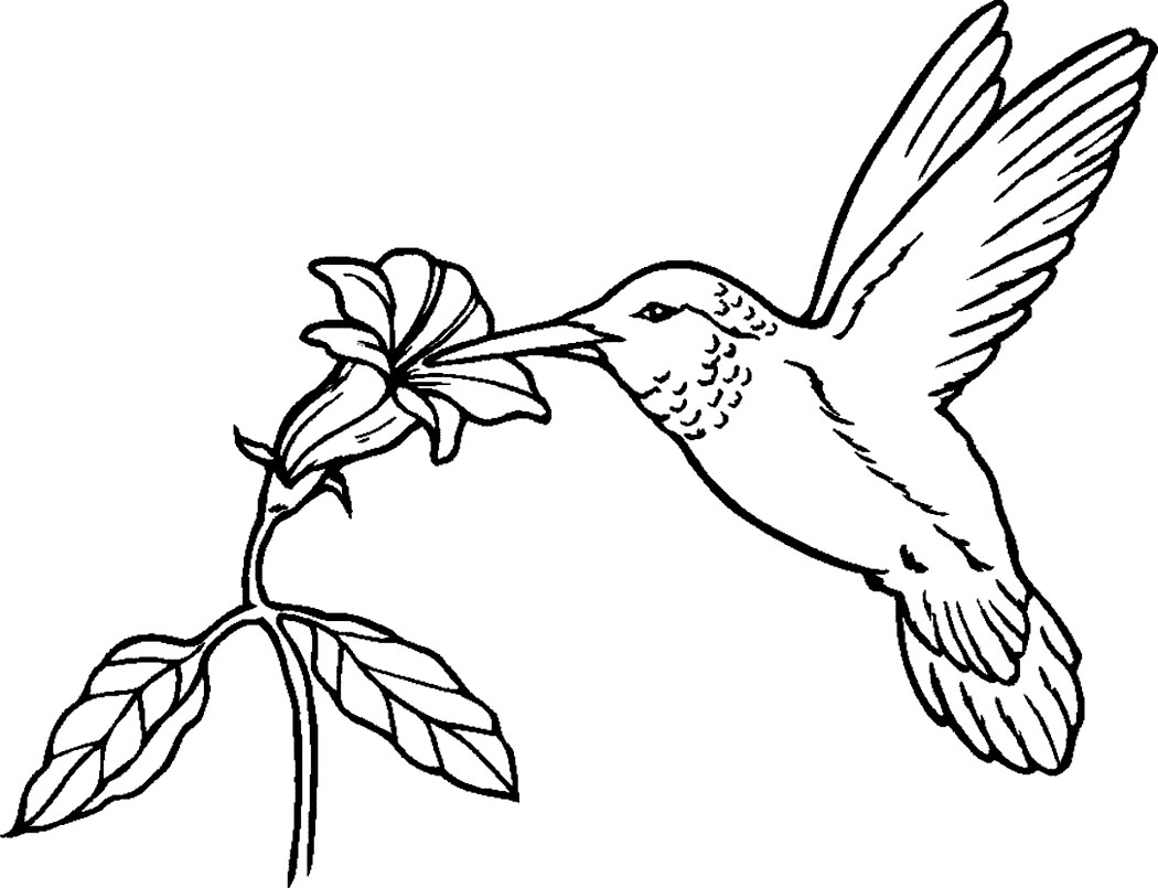 Adult Top Coloring Pages Of Hummingbirds Images beauty printable hummingbird coloring pages me page images
