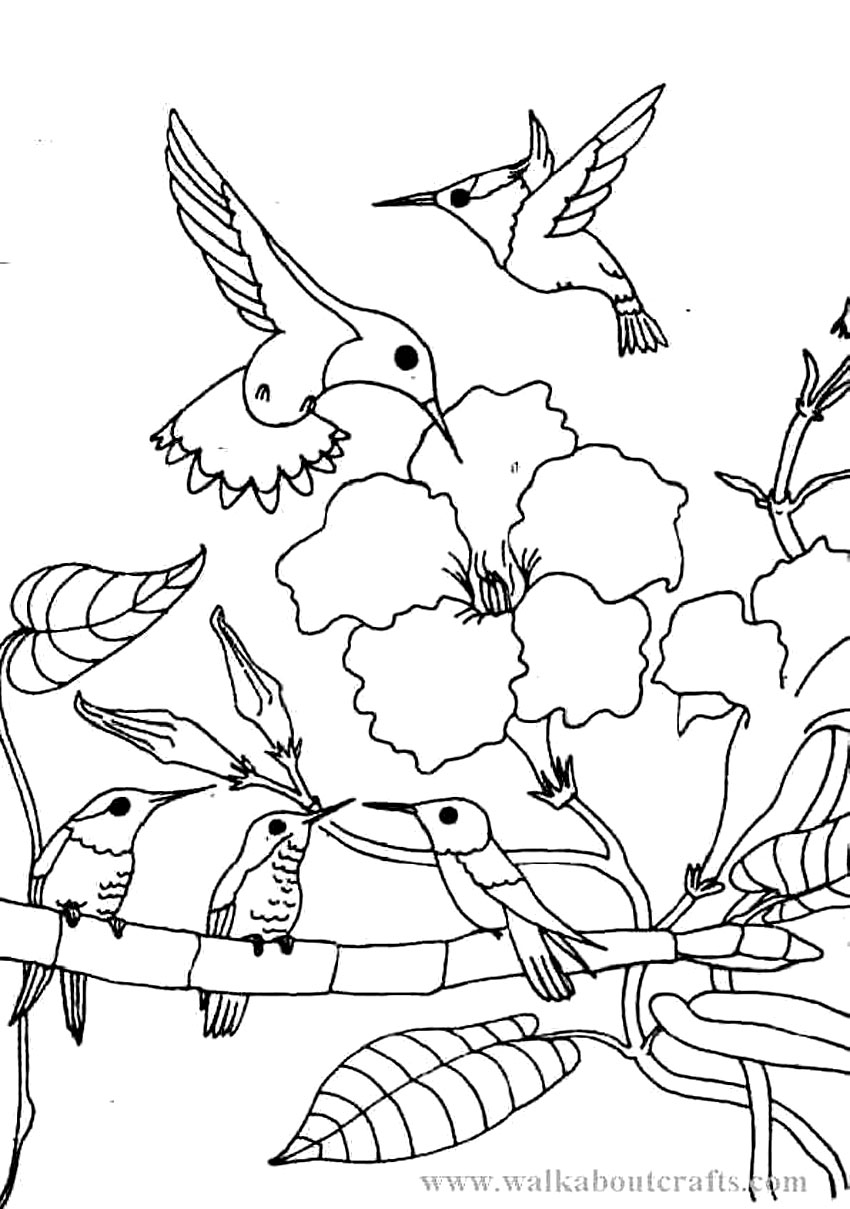 Printable Hummingbird Coloring Pages | ColoringMe.com