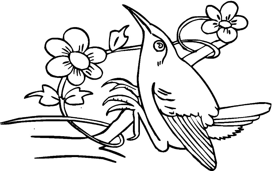Printable Hummingbird Coloring Pages Coloring Coloring Pages