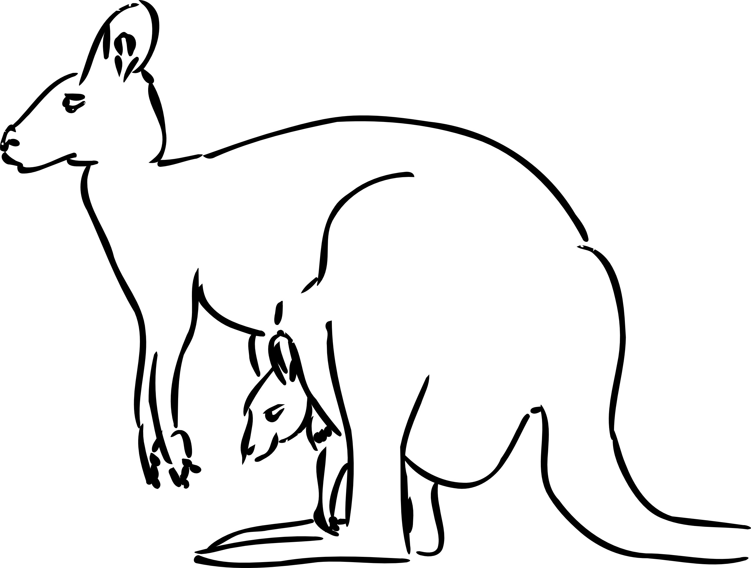 Free coloring pages kangaroo - Printable Kangaroo Coloring Pages Coloring Me