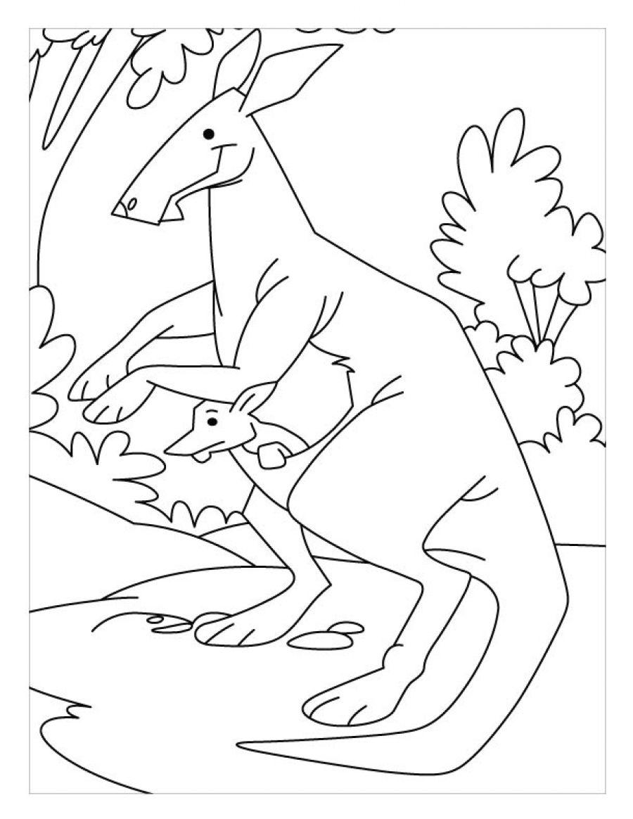 Printable coloring pages kangaroos - Kangaroo Printable Coloring Pages