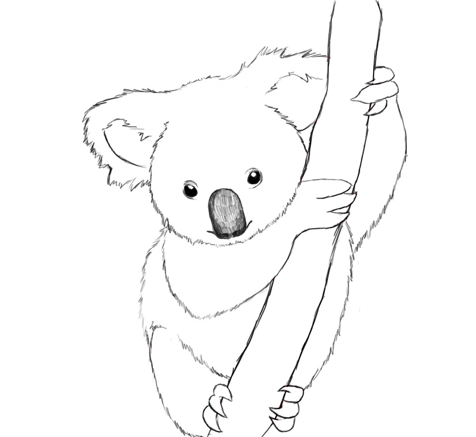 Printable Koala Coloring Pages Coloring Me Koala Coloring Pages