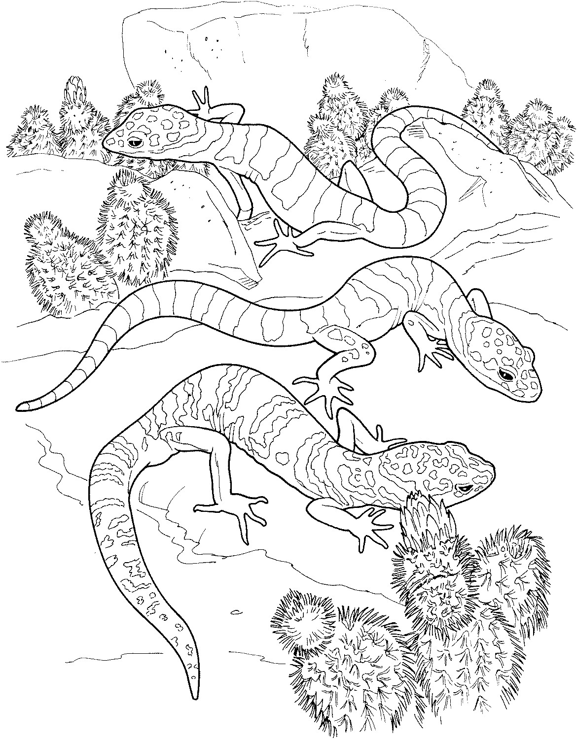 Lizards coloring pages to print - Lizard Coloring Page New