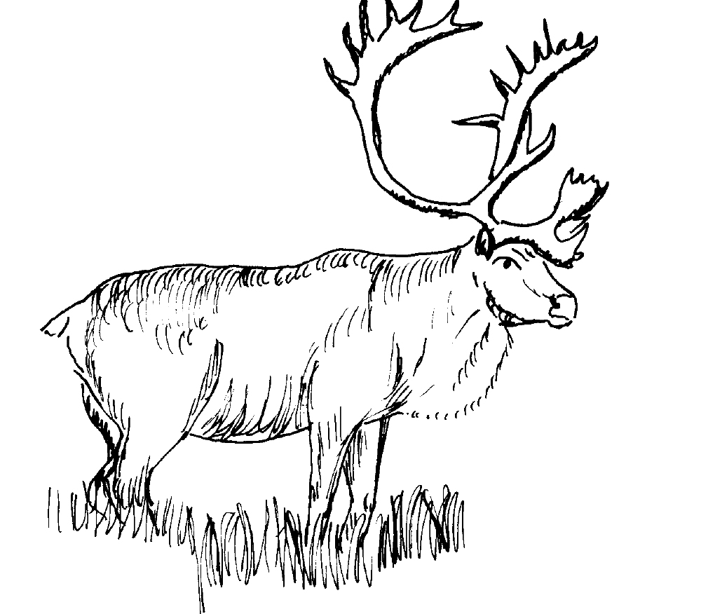 Moose Coloring Pages Printable Moose Coloring Pages  Coloring Me