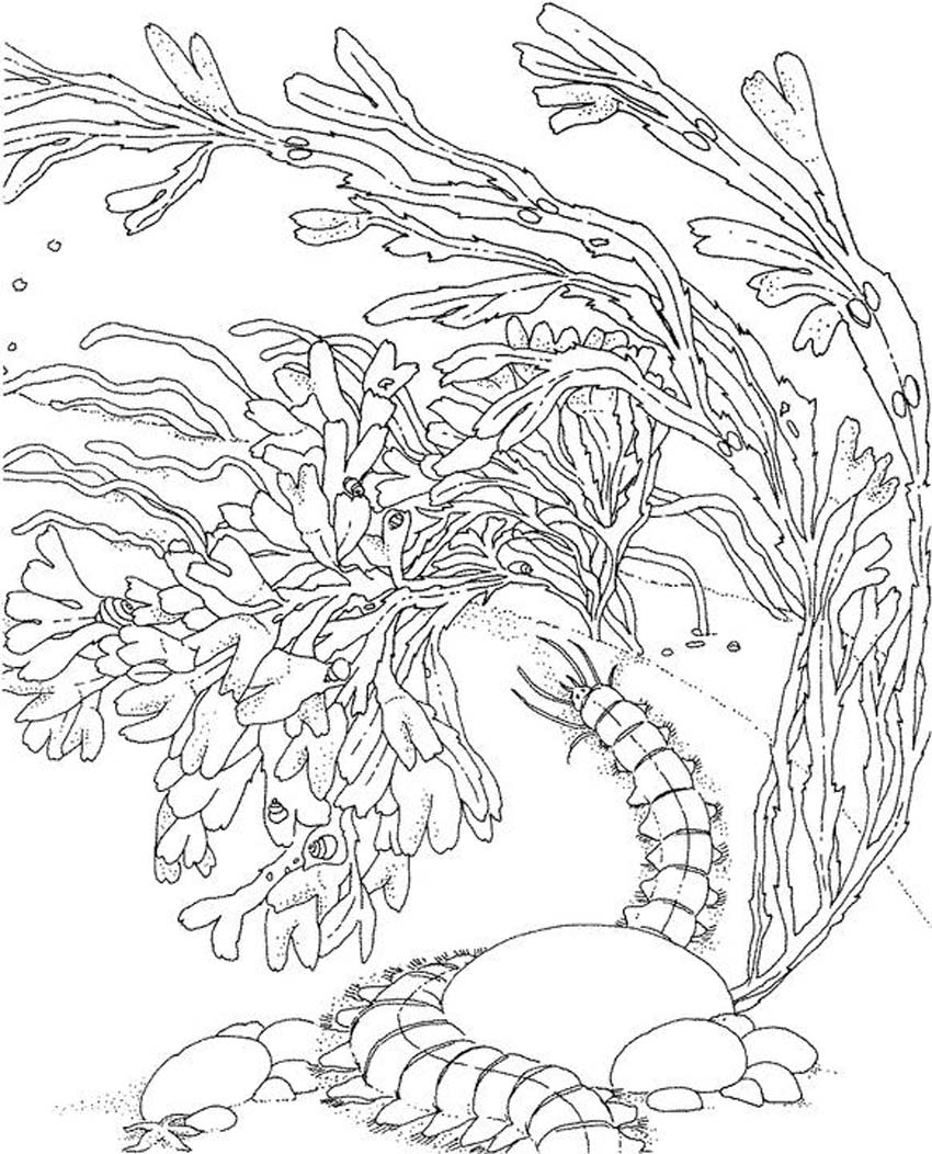ocean coloring book pages - photo #23