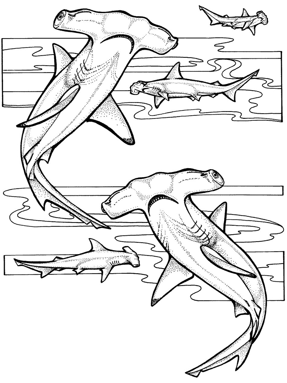 ocean coloring pages - Ocean Animals Coloring Pages