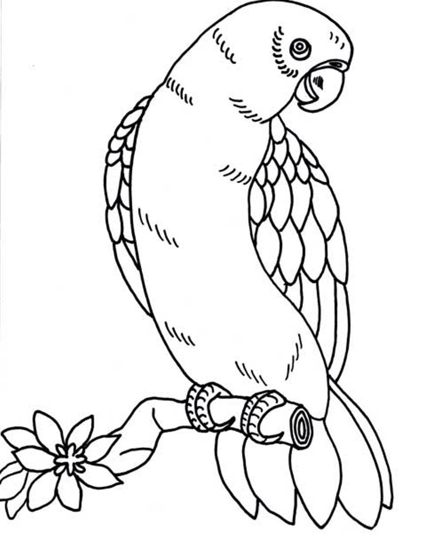 parrot coloring pages bird - photo#21