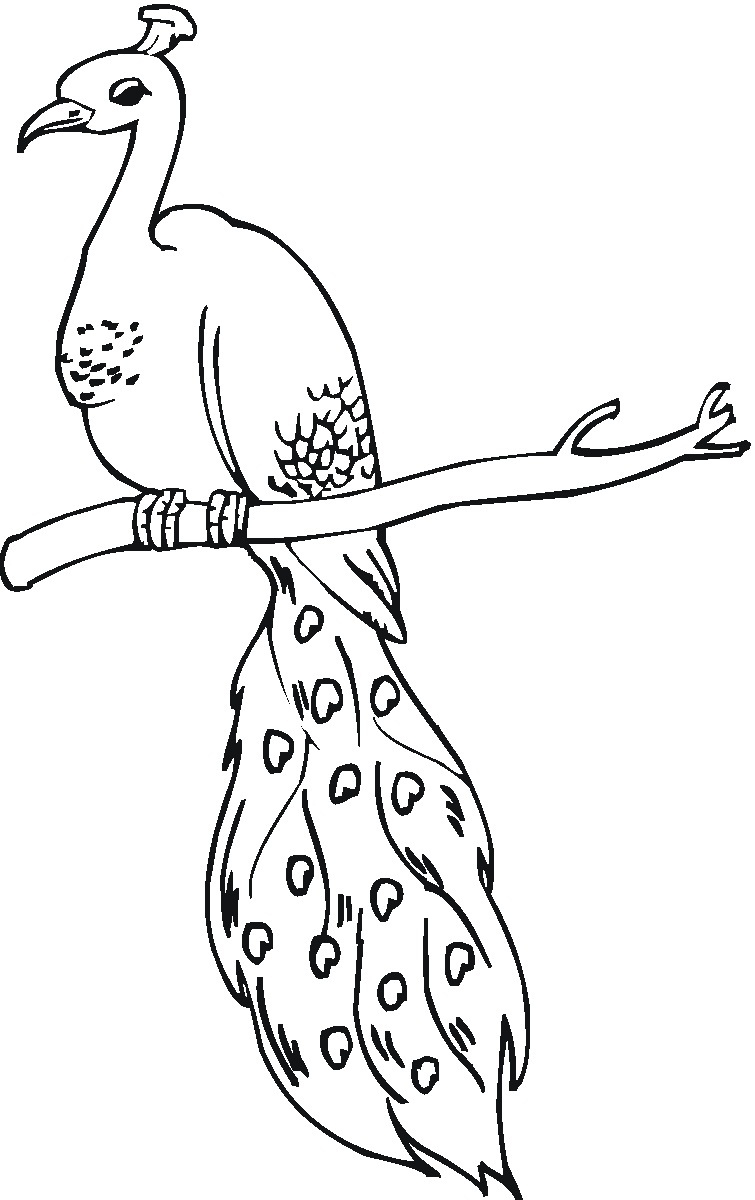 Peacock Coloring Sheet Coloring Pages