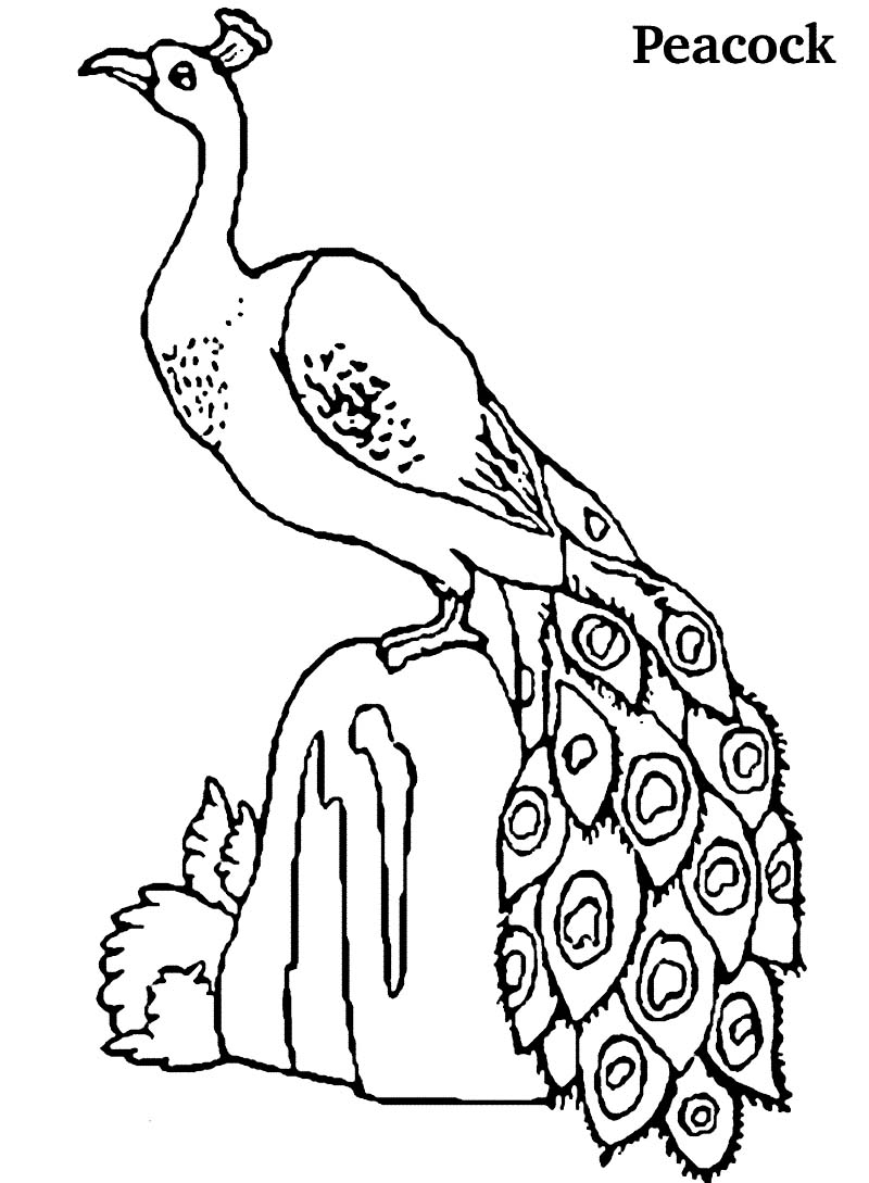 Coloring pages peacock