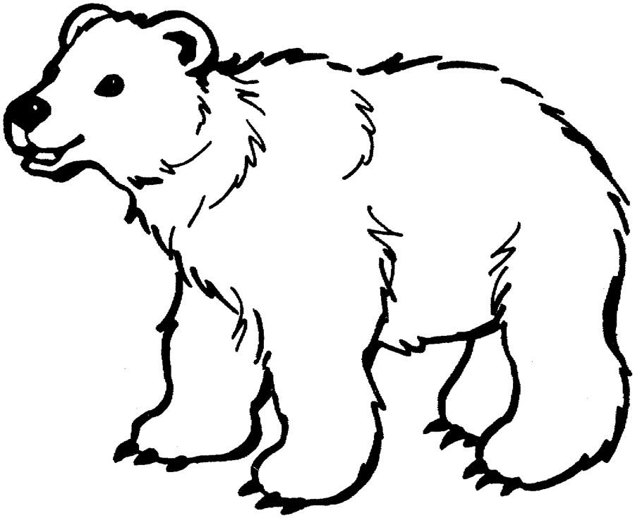 graphic about Polar Bear Printable called Printable Polar Undertake Coloring Internet pages