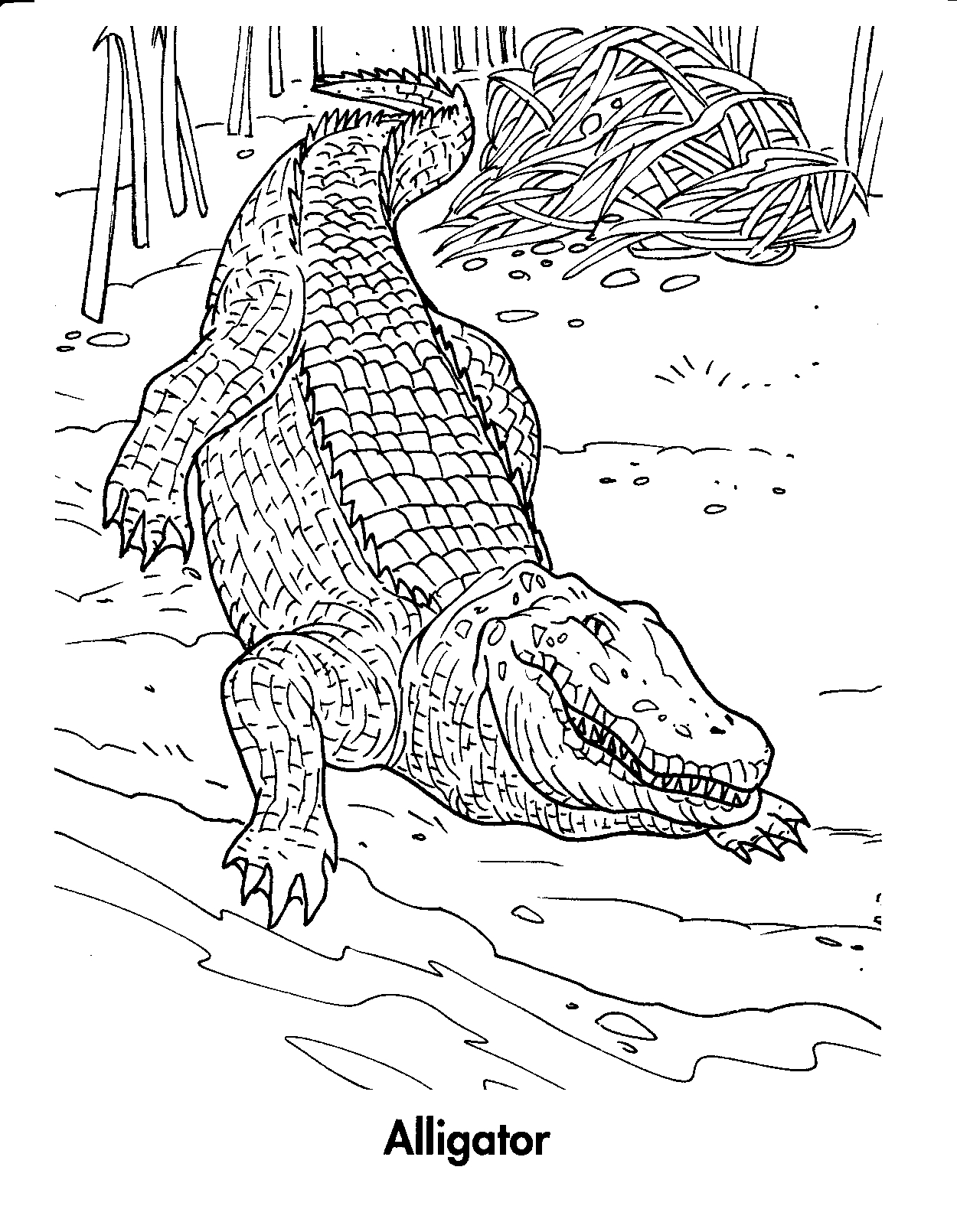 Printable Alligator Coloring Pages Coloringme Com