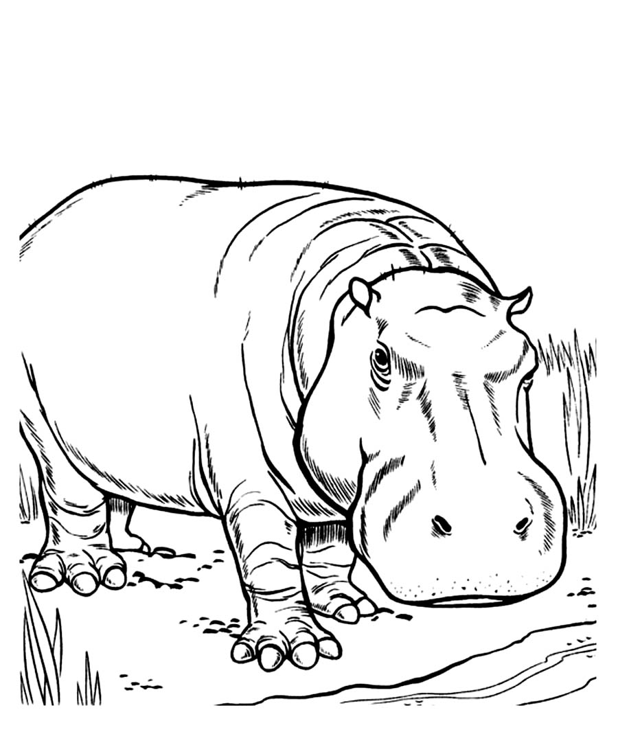 Printable Hippo Coloring Pages Coloring Me