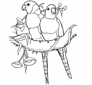 Printable Parrot Coloring Pages for Kids