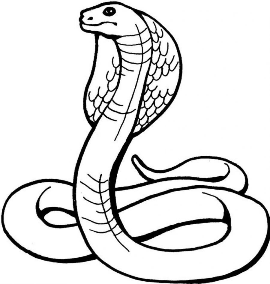 coloring book pages of snakes - photo#9