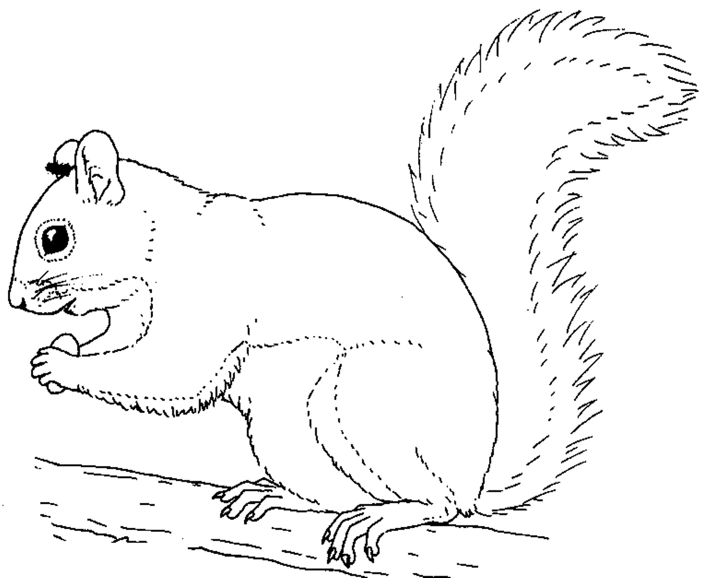 Squirrel Printable