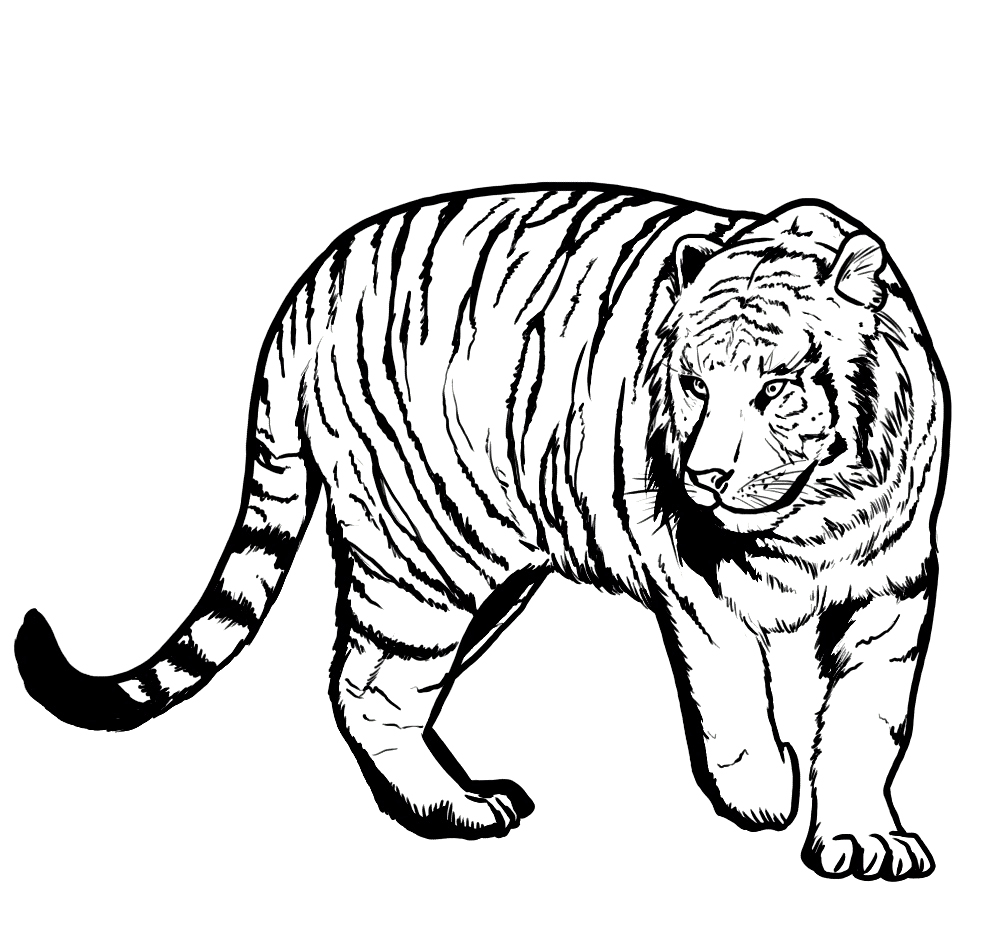 Printable Tiger Coloring Pages for Kids | ColoringMe.com