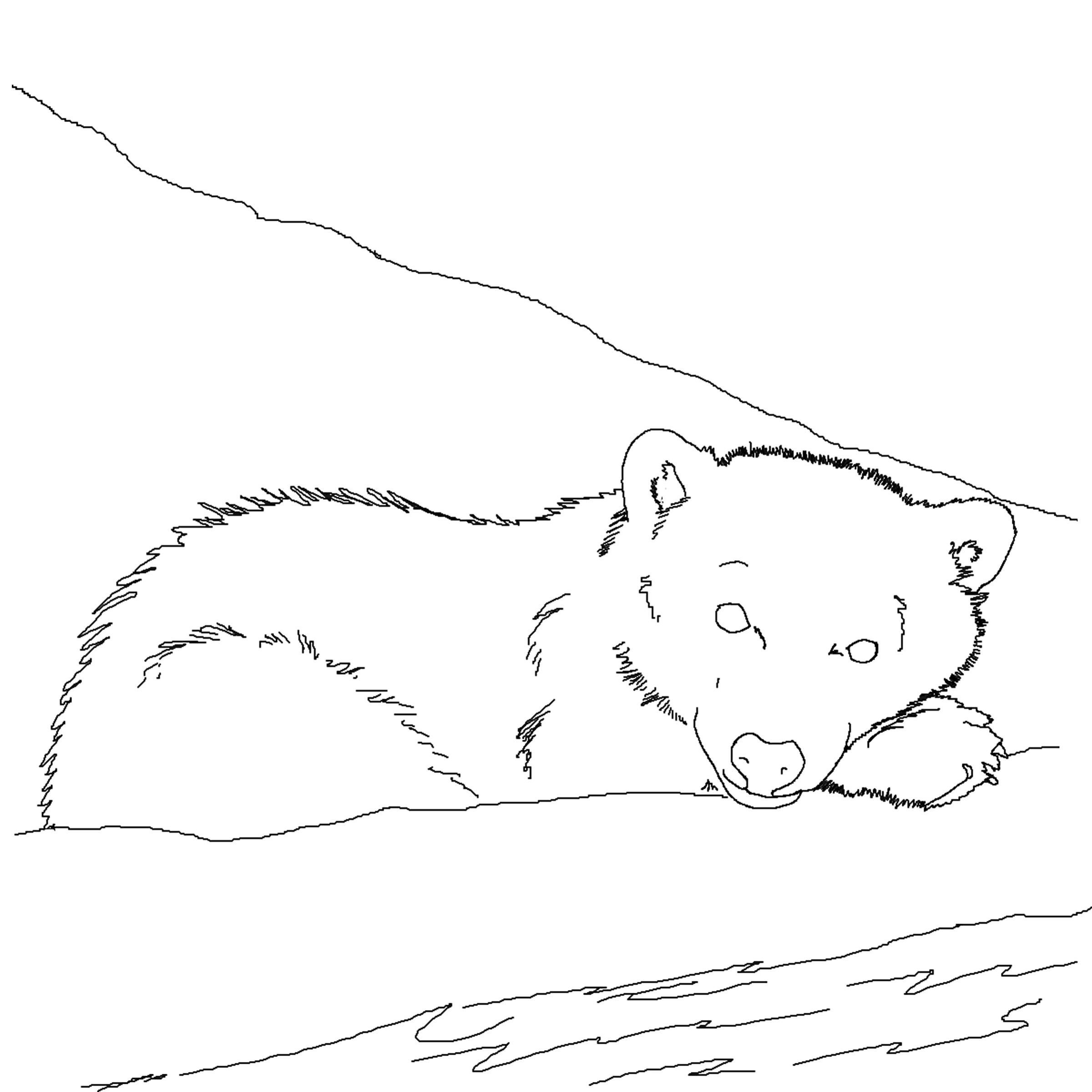 Printable Polar Bear Coloring Pages | Coloring Me