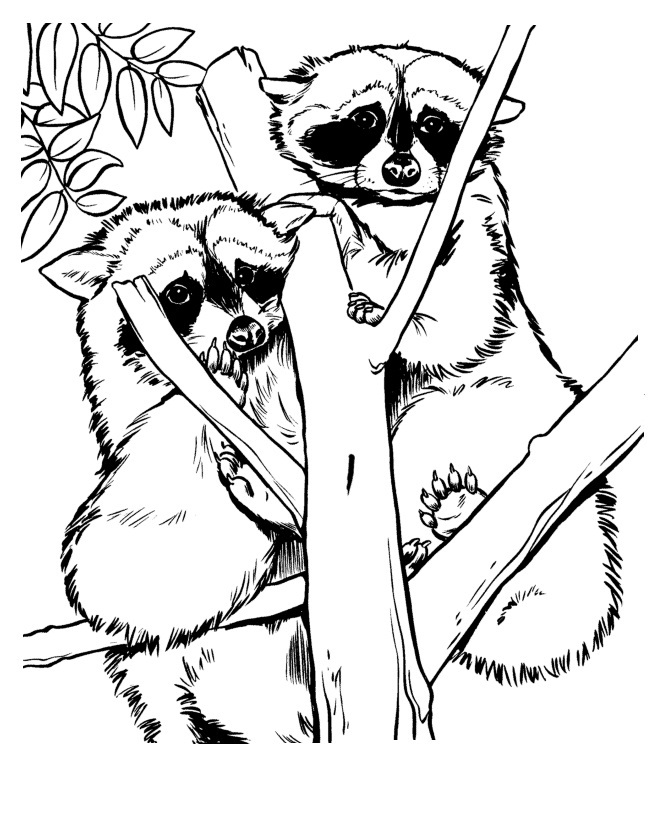 Printable Raccoon Coloring Pages Coloring Me Raccoon Coloring Pages