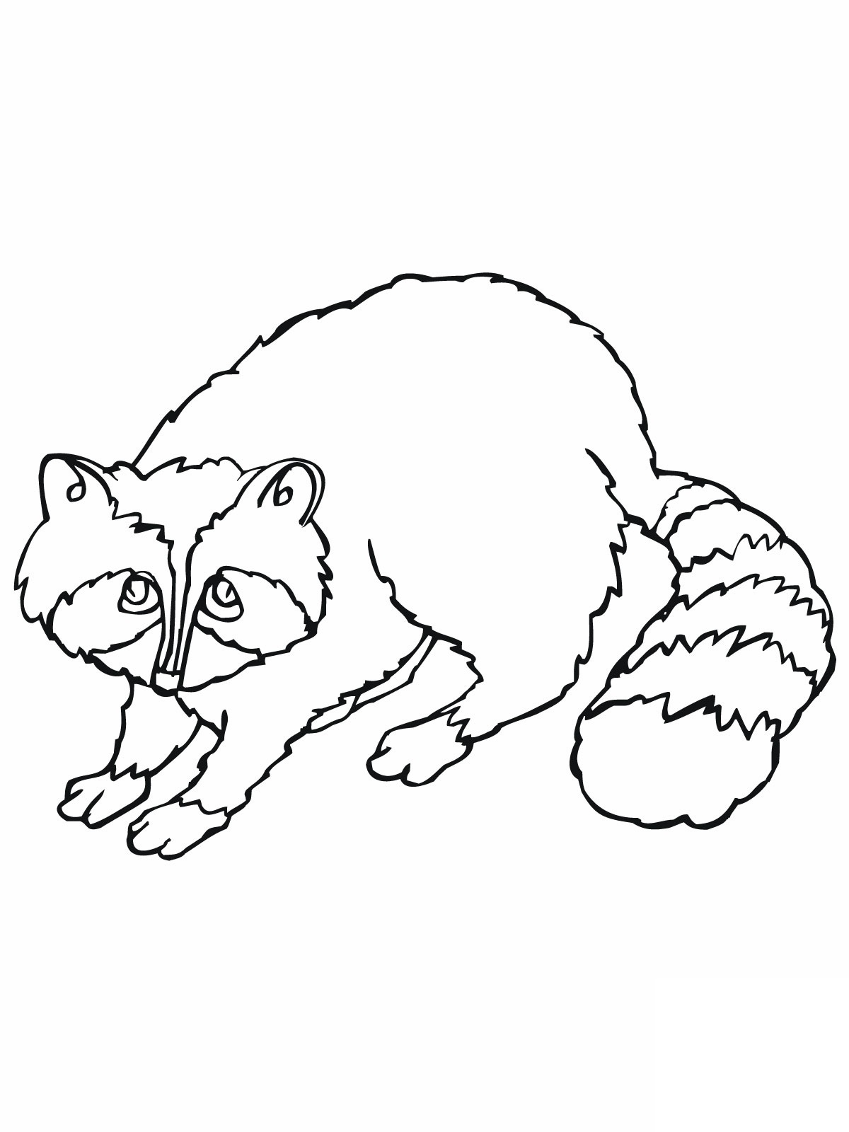 Coloring pages raccoon - Raccoon Coloring Sheets