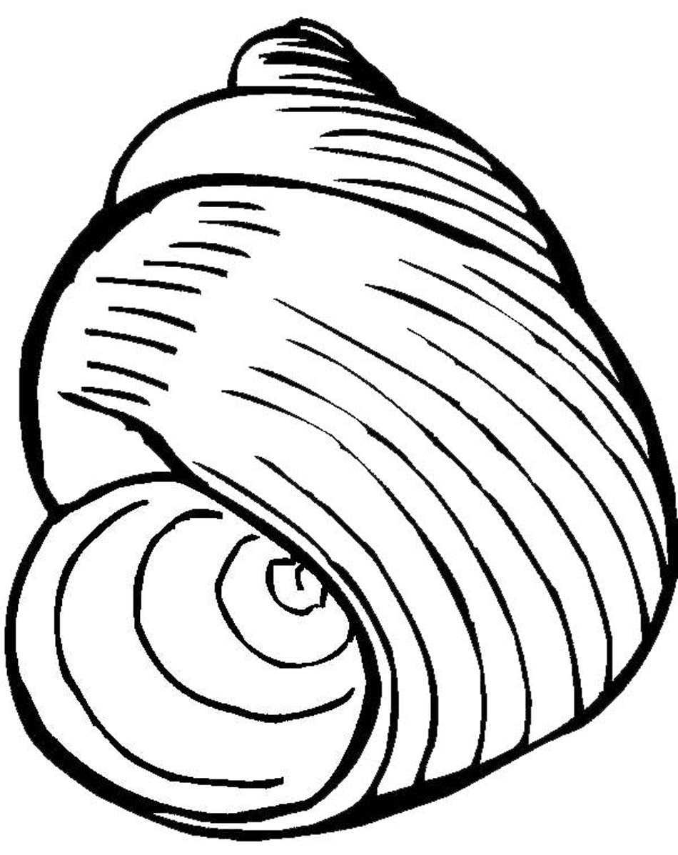 seashell coloring sheets free printable seashell coloring pages - Seashell Coloring Pages Printable