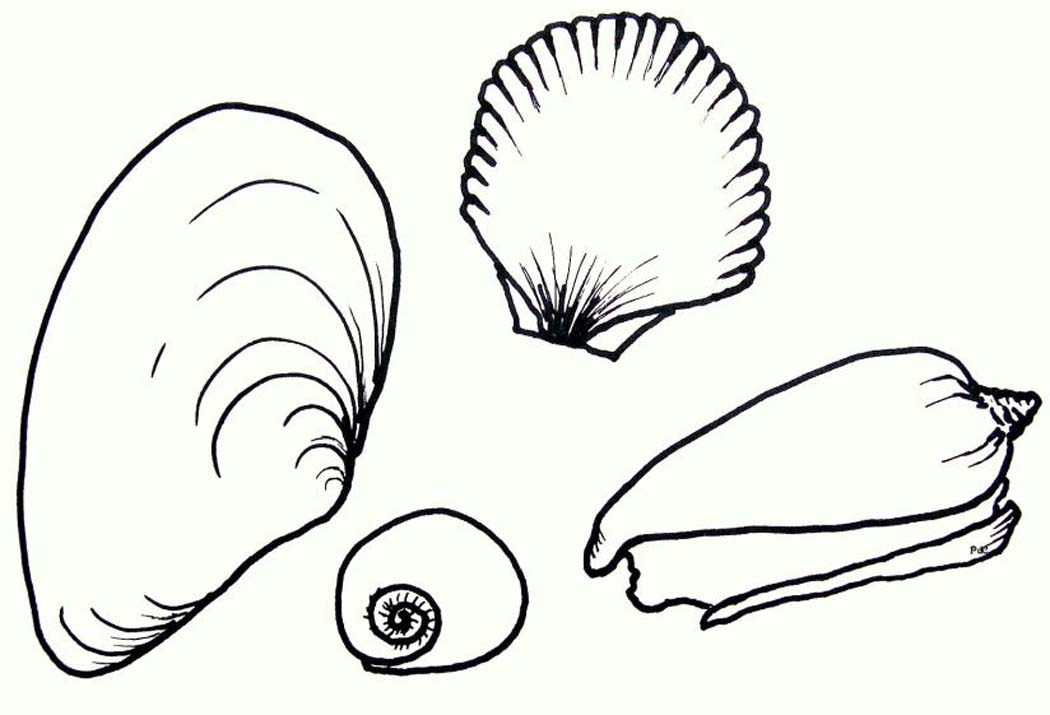 seashell coloring sheets free printable seashell coloring pages