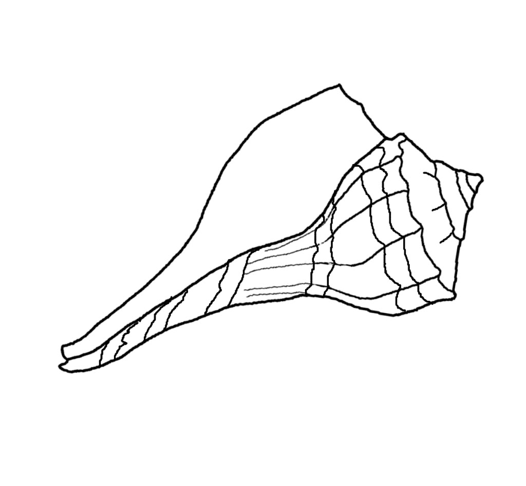 printable seashell coloring pages   coloring me - Seashell Coloring Pages Printable
