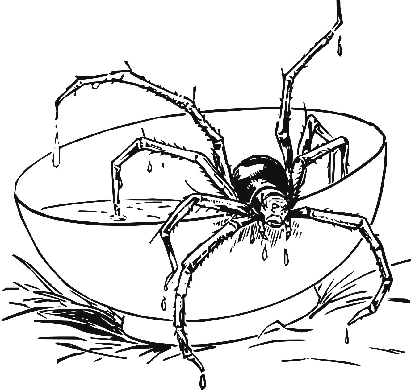coloring pages tarantula - photo#12