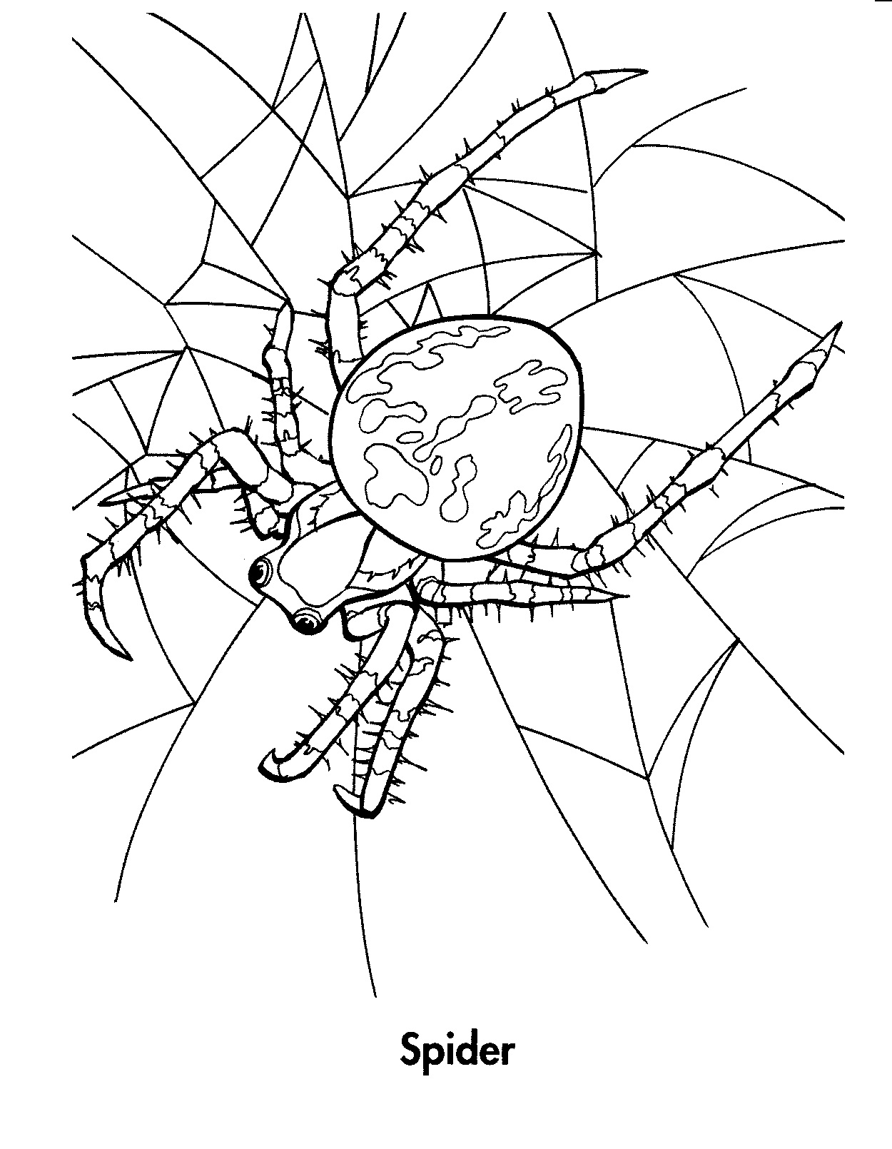 Free incy wincy spider sheets coloring pages