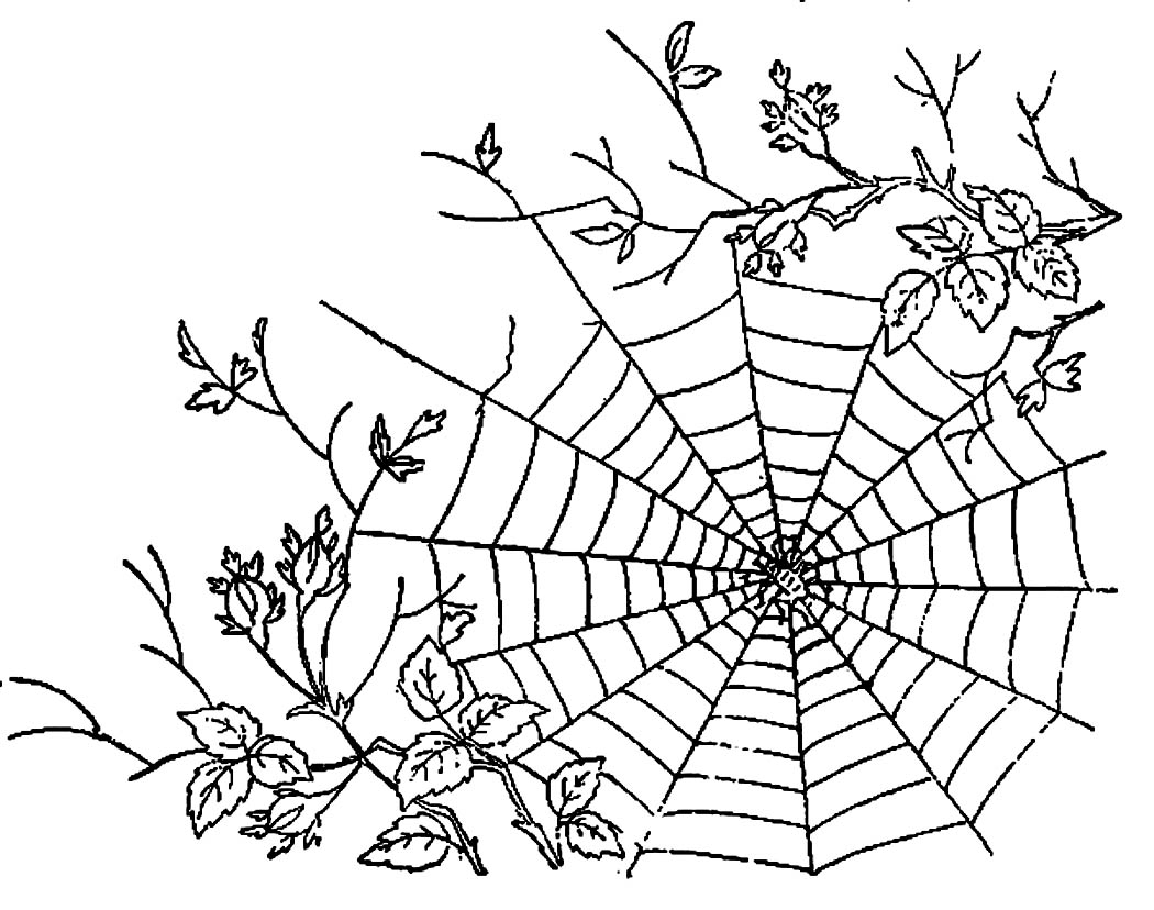 free spider web coloring pages - photo#23