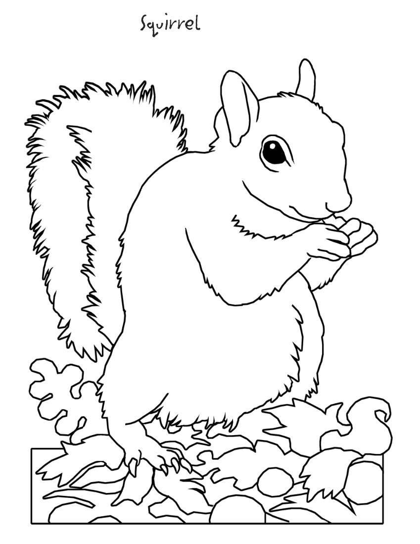 squirrel coloring sheets