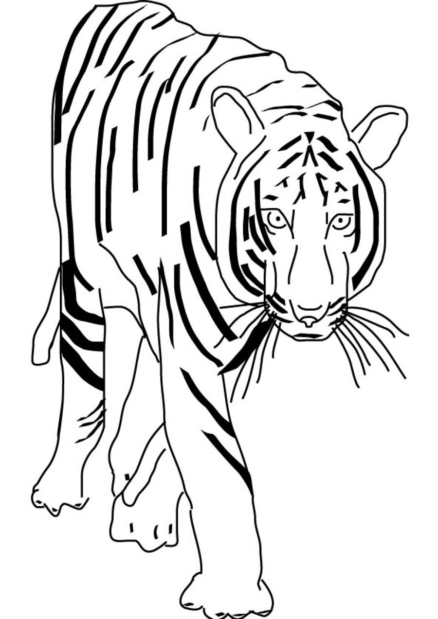 Free Coloring Pages Of A Tigers Face