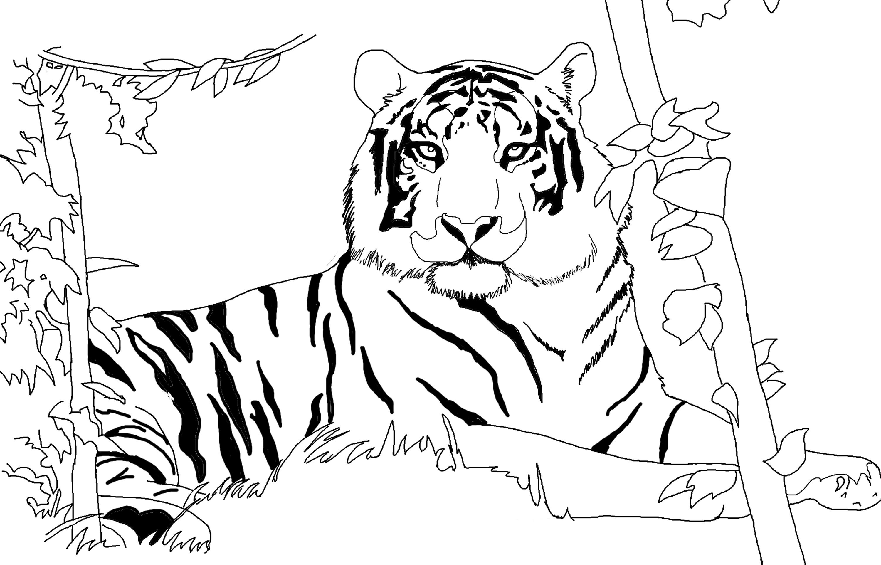 african tiger coloring pages - photo#34