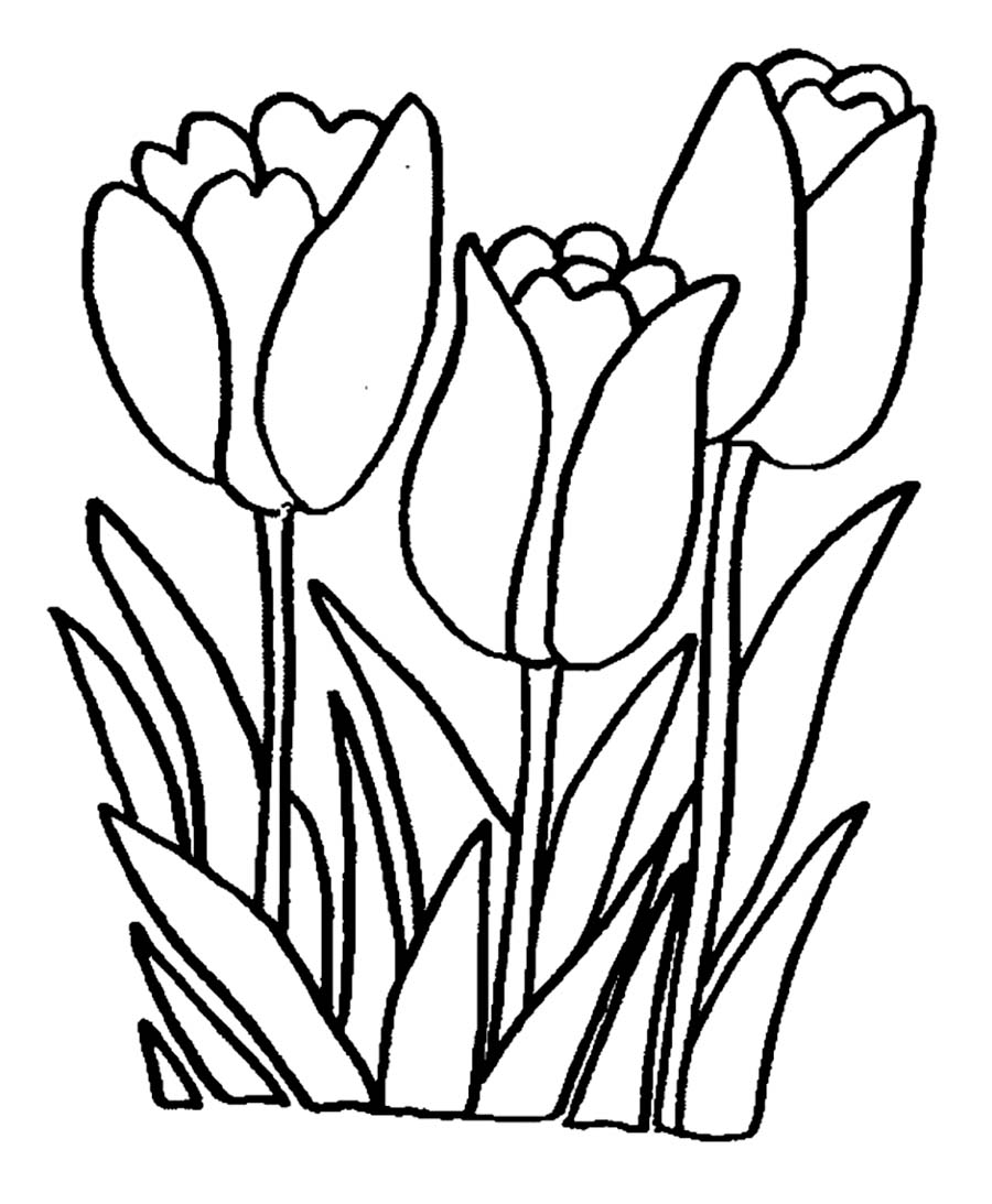 Printable Tulip Coloring Pages Coloring Me Tulip Coloring Page