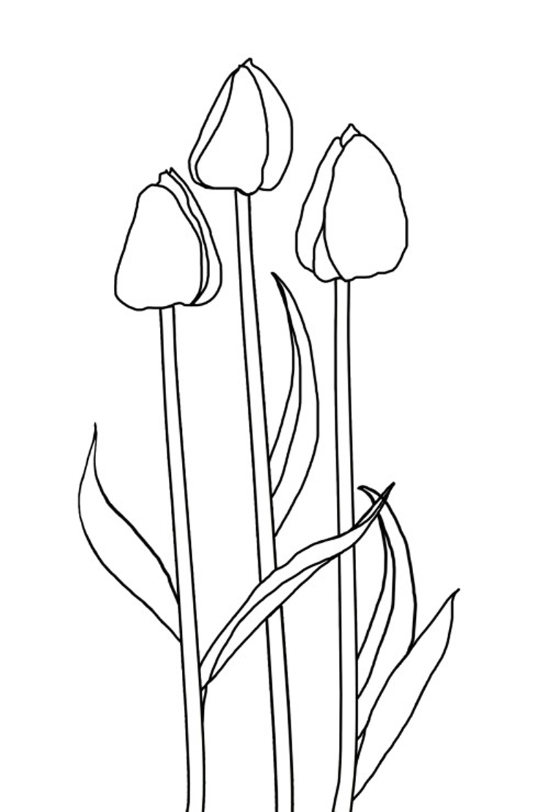 Free coloring pages tulips