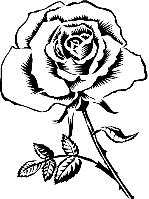 coloring pages rose coloring me