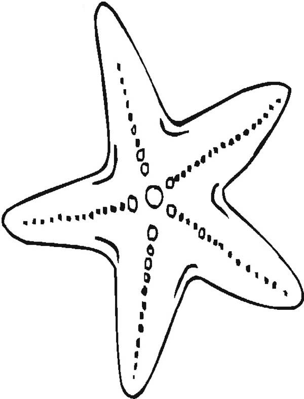 Printable Starfish Coloring Pages | Coloring Me