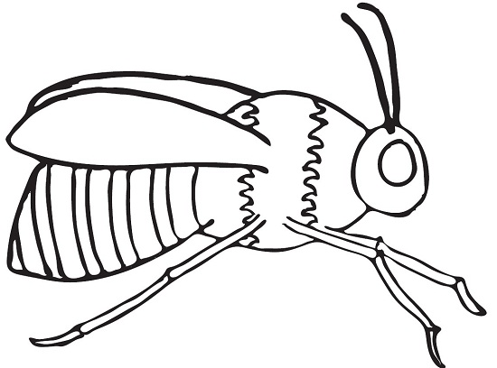 honey bee coloring pages for kids sky
